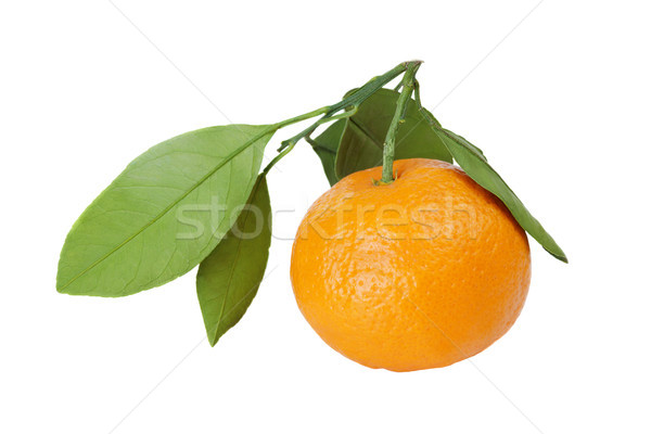 Mandarim tangerina branco maduro laranja folhas verdes Foto stock © Epitavi
