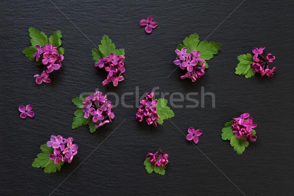 сирень цветы черный небольшой красные цветы зеленые листья Сток-фото © Epitavi