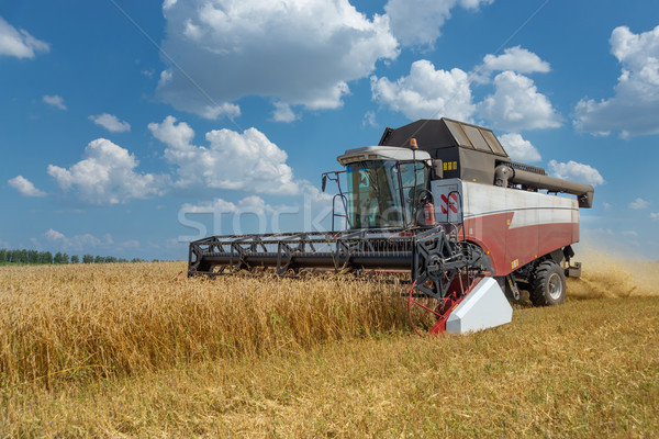 Harvester on a field of wheat Stock photo © Epitavi