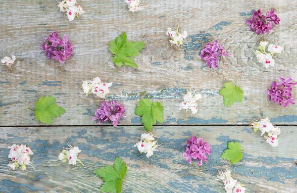 異なる 花 木製 小 赤い花 ライラック ストックフォト © Epitavi