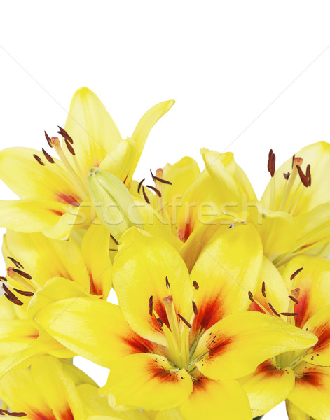 Geel lelie witte boeket lelies bloemen Stockfoto © Epitavi