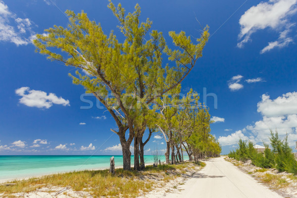 Image of trees along a pathway on the beach Stock photo © epstock