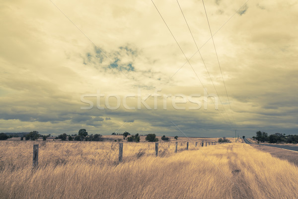Outback Landscape with dramatic sky and  yellow dry grass Stock photo © epstock