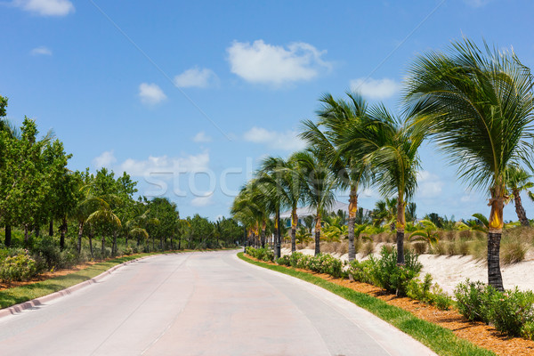 Palm trees along a road Stock photo © epstock