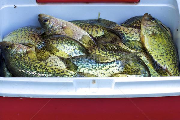 Zwarte vis sport natuur ontspanning staart Stockfoto © erbephoto
