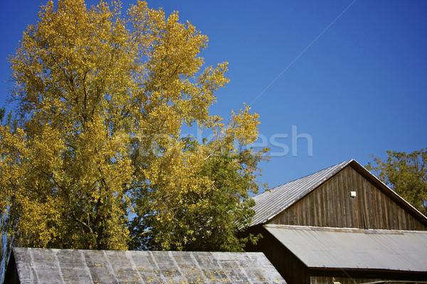Vallen boerderij loof rustiek natuur bladeren Stockfoto © erbephoto