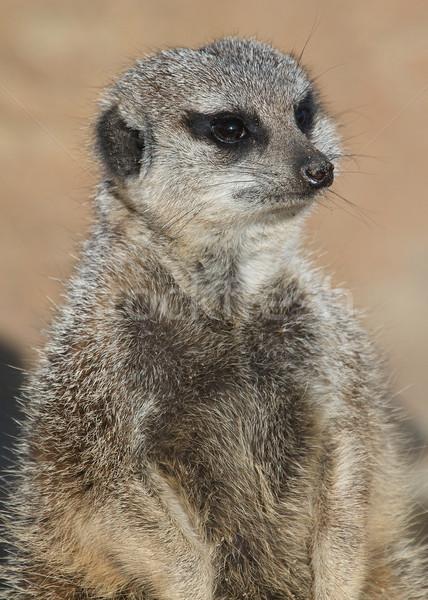Bewaker dierentuin gezicht natuur haren dier Stockfoto © erbephoto
