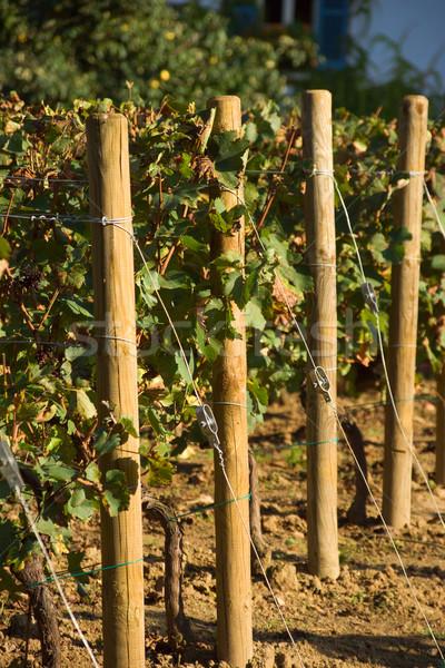 Párizsi szőlőskert ház kertészkedés Párizs Franciaország Stock fotó © ErickN
