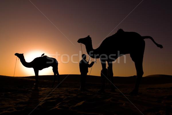 Chameau silhouettes sunrise deux chameaux pilote Photo stock © ErickN