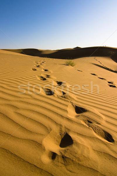 Ayak izleri kum çöl doğa yaz macera Stok fotoğraf © ErickN
