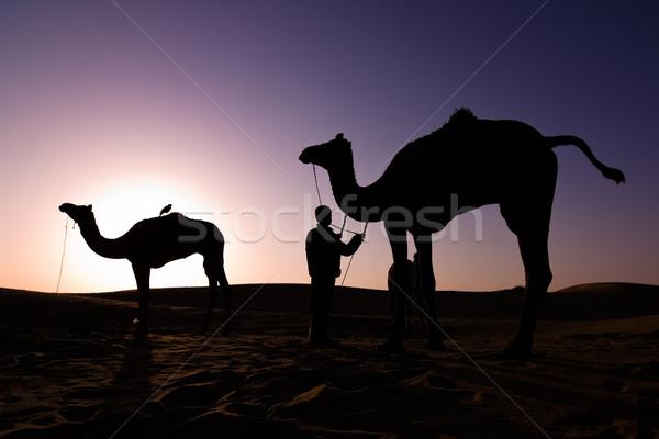 Wielbłąda sylwetki Świt dwa wielbłądy kierowcy Zdjęcia stock © ErickN
