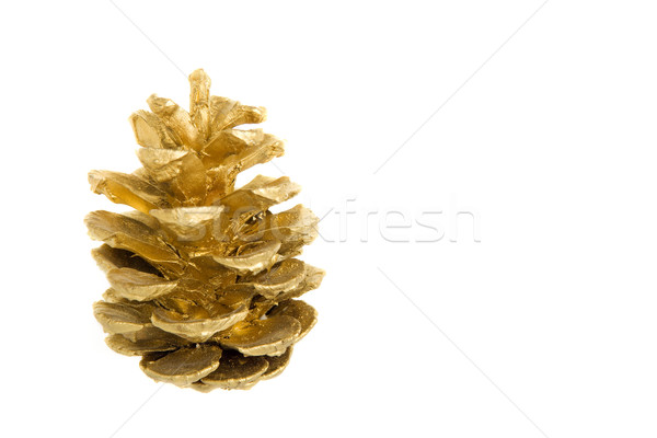 Golden pine cone Stock photo © ErickN