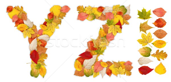 Stock photo: Characters Y and Z made of autumn leaves