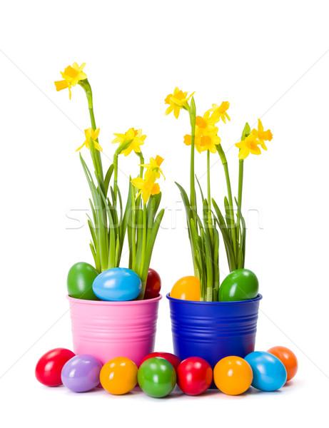 нарциссов красочный пасхальных яиц свежие желтый окрашенный Сток-фото © erierika