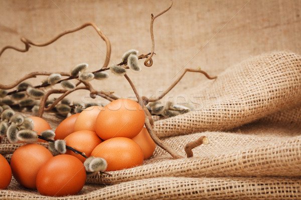 Brown eggs and catkin Stock photo © erierika
