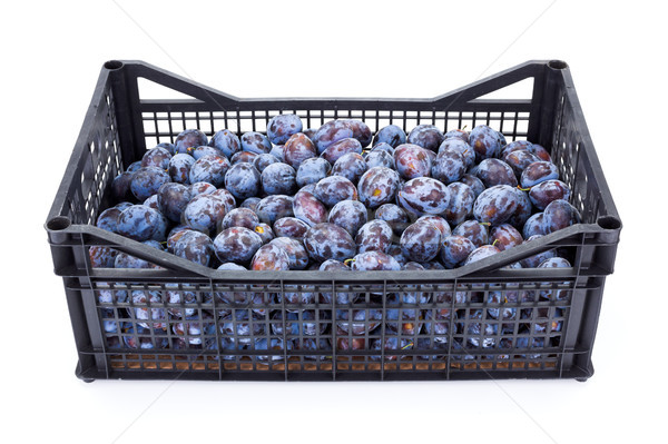 Plums (Prunus) in plastic crate Stock photo © erierika