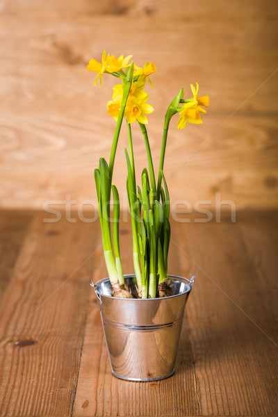 Narcisos estanho pote fresco amarelo rústico Foto stock © erierika