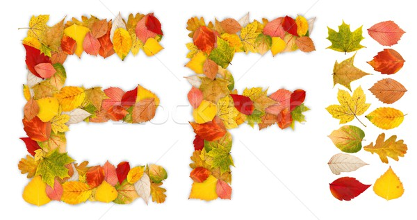 Characters E and F made of autumn leaves Stock photo © erierika