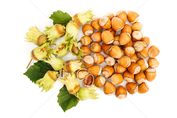 Top view of fresh hazelnut Stock photo © erierika
