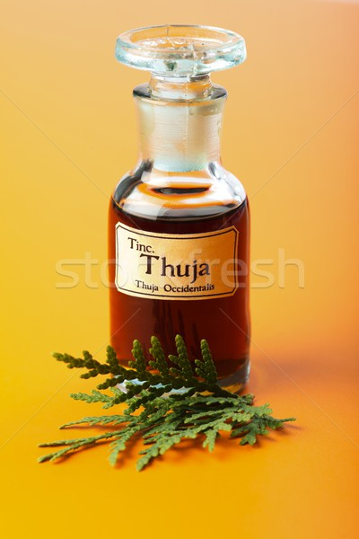Thuja Occidentalis plant and extract Stock photo © erierika