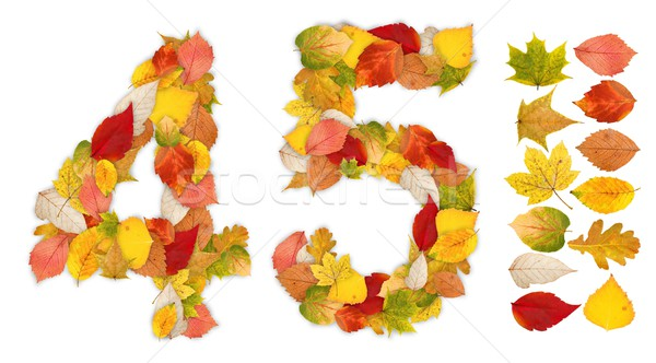 Numbers 4 and 5 made of autumn leaves Stock photo © erierika