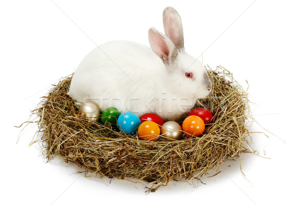 White rabbit in hay nest with colored eggs Stock photo © erierika