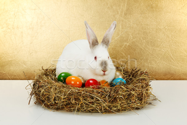 White rabbit in hay nest with colorful eggs Stock photo © erierika