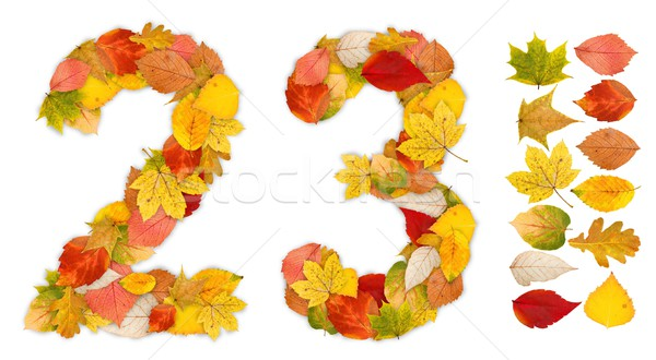 Numbers 2 and 3 made of autumn leaves Stock photo © erierika