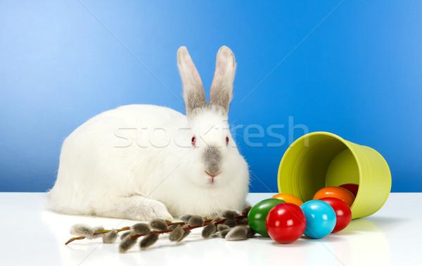 Páscoa rabino ovos branco colorido primavera Foto stock © erierika