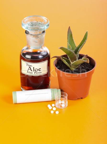 Aloe Ferox plant, extract and homeopathic pills Stock photo © erierika