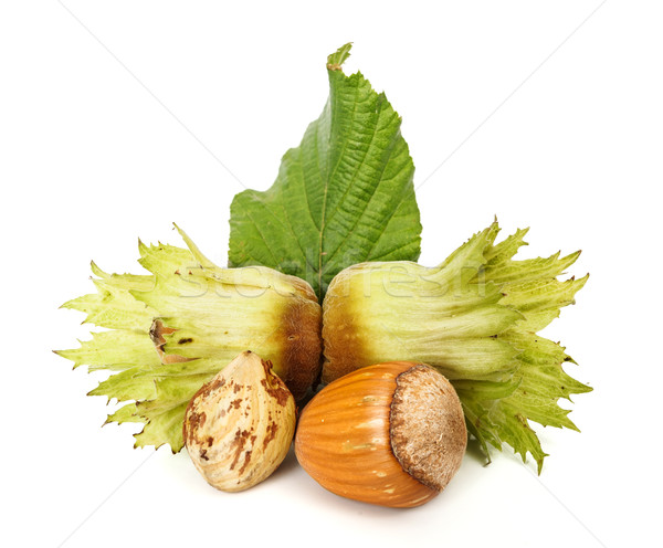 Fresh hazelnut cob, husk and leaf Stock photo © erierika