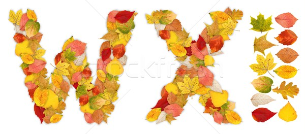 Characters W and X made of autumn leaves Stock photo © erierika