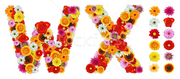 Characters W and X made of various flowers Stock photo © erierika