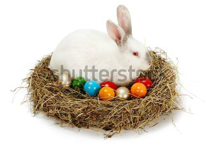 Easter bunny in nest with painted eggs Stock photo © erierika