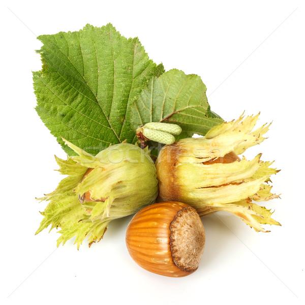 Hazelnuts on white background Stock photo © erierika