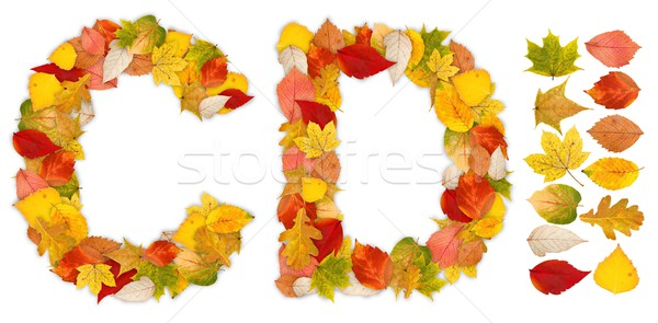 Characters C and D made of autumn leaves Stock photo © erierika