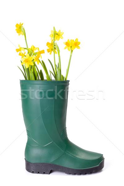 Stockfoto: Geel · narcissen · gom · boot · vers · groene