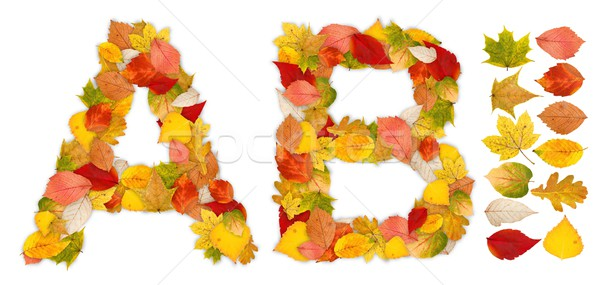 Characters A and B made of autumn leaves Stock photo © erierika