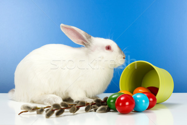 Easter rabbit and eggs Stock photo © erierika