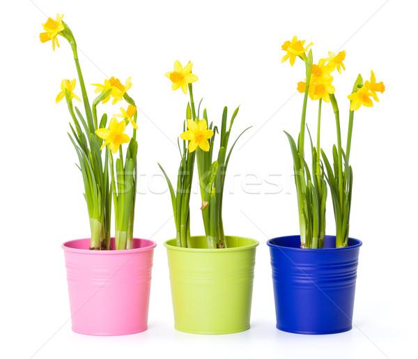 Geel narcissen kleurrijk mooie vers tin Stockfoto © erierika