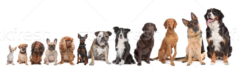 Stock photo: twelve dogs in a row