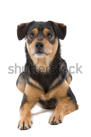 Stock photo: mixed breed dog