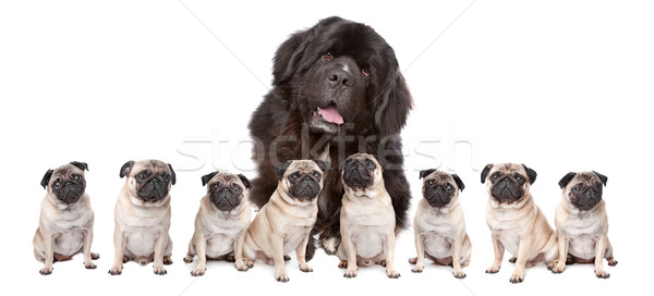 Big Dog Small Dog Stock photo © eriklam