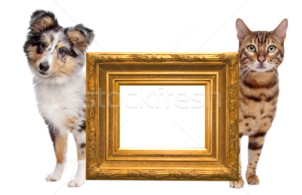Cat and dog side to side Stock photo © eriklam