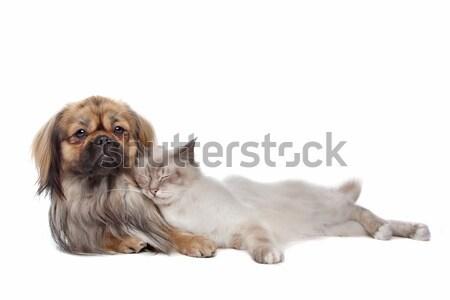 Köpek kedi beyaz sevmek hayvanlar arkadaş Stok fotoğraf © eriklam