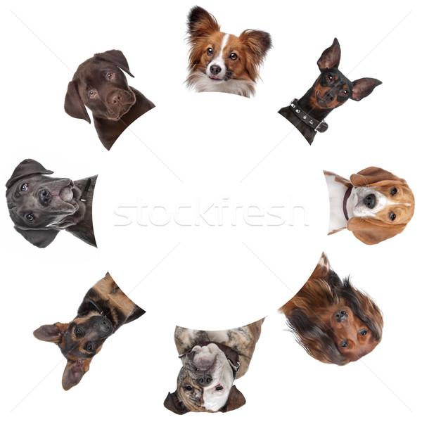 Stok fotoğraf: Grup · köpek · portreler · etrafında · daire