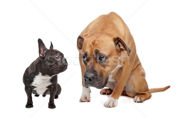 Big Dog Small Dog Stock photo © eriklam