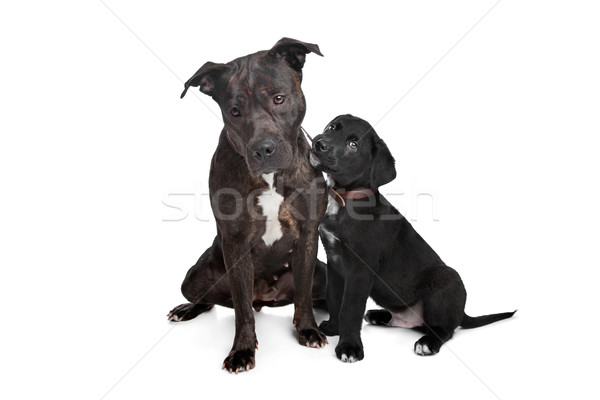Stock photo: two mixed breed dogs