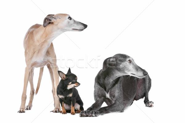Dos amigos grupo animales estudio mascota Foto stock © eriklam