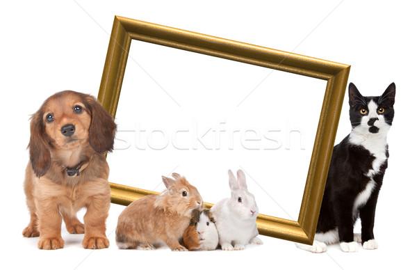 Groep huisdieren permanente rond gouden fotolijstje Stockfoto © eriklam